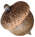 Photo of an acorn isolated on a brown background.